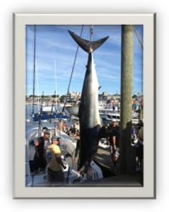 Shark Fishing Jupiter Stuart Florida