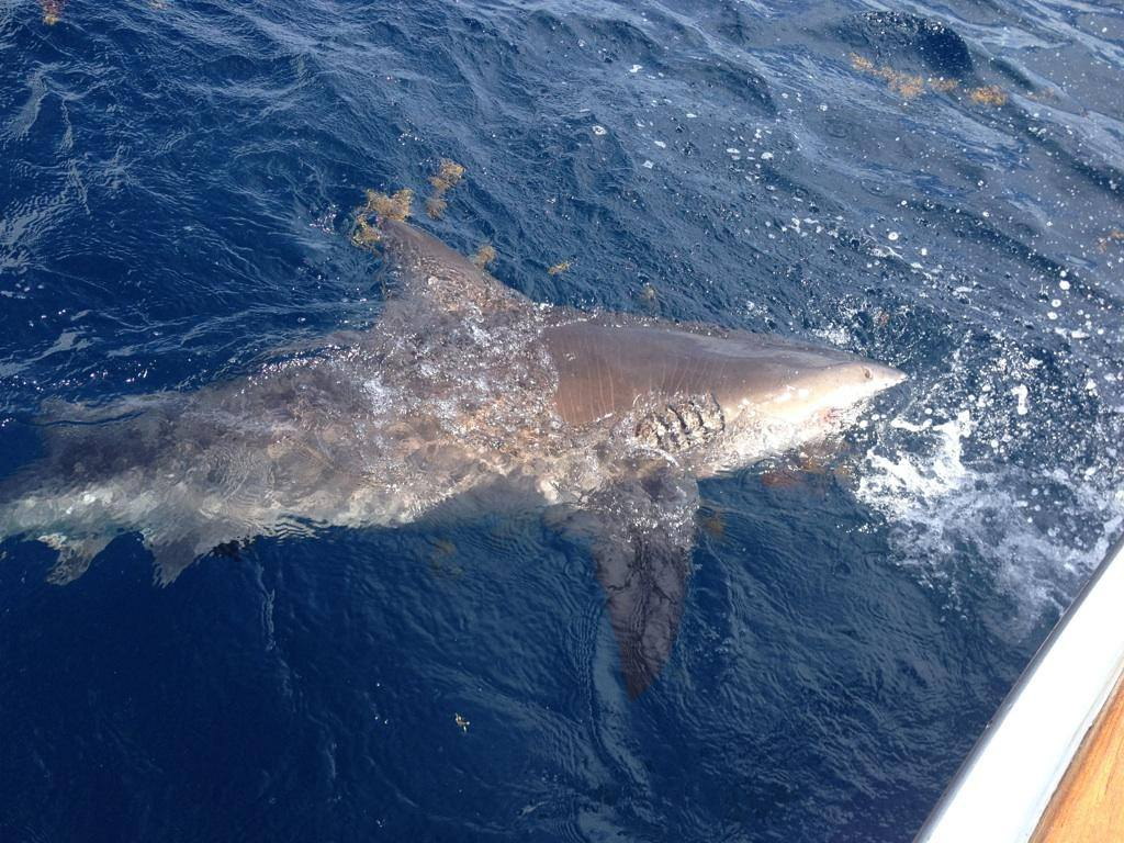 Shark Fishing Charters Florida